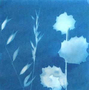 sunprint image of flowers