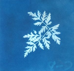sunprint image of a leaf